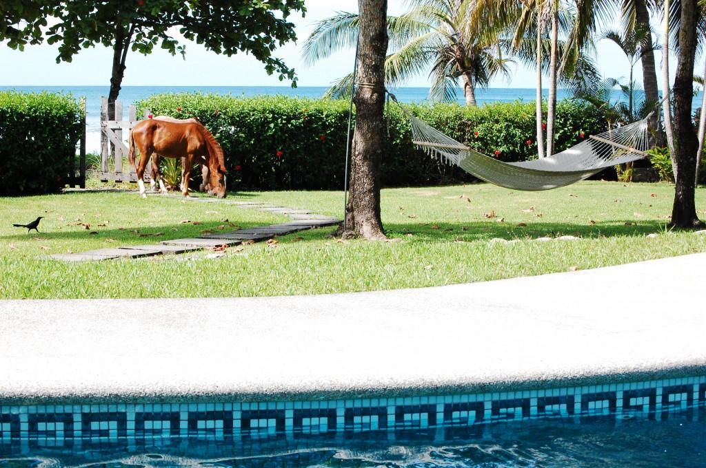 cliquer pour voir d'autres photos du costa rica